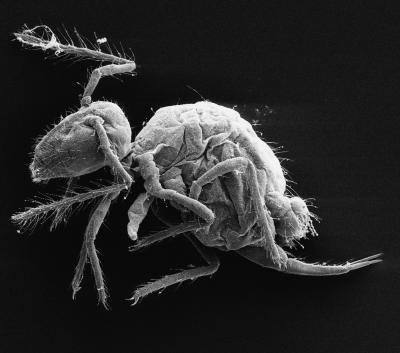 Bizarre Insectlike Creatures Discovered in Spanish Cave
