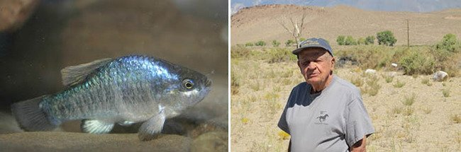 Phil Pister Pupfish 670.jpg
