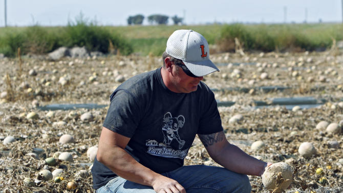 FILE - In this Sept. 28, 2011, file photo, co-owner Eric Jensen examines cantaloupe on the Jensen Farms near Holly, Colo. Jensen and Ryan Jensen, 33, brothers who owned and operated Jensen Farms, presented themselves to U.S. Marshals in Denver, Thursday, Sept. 26, 2013, and were taken into custody on federal charges of introducing adulterated food into interstate commerce. As many as 33 people died and more than 140 were hospitalized from Listeria found on Jensen Farms Cantaloupe. (AP Photo/Ed Andrieski, File)