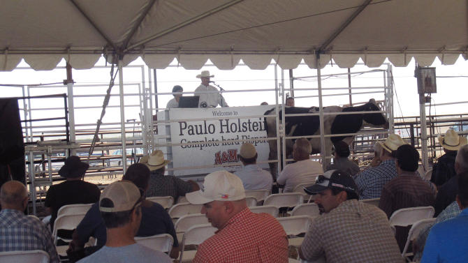 In this photo taken Sept. 14, 2012, people bid on dairy cows from a herd being sold at a dispersal auction in Hanford, Calif. Across California, the nation's largest dairy state, dozens of dairy operators have filed for bankruptcy or sold their herds because of high feed costs and milk prices that are lower than in other states. (AP Photo/Gosia Wozniacka)