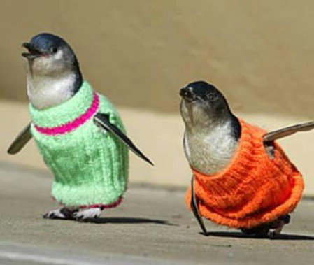 Penguins in Sweaters: Your argument is invalid