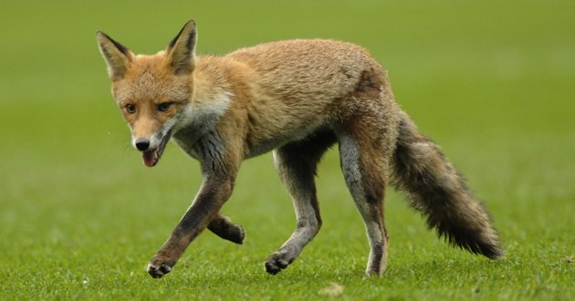 What does it mean when the woodland creatures no longer fear us?  FOX-jpg_150511
