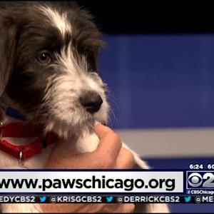 PAWS Pet Of The Week: Lemony