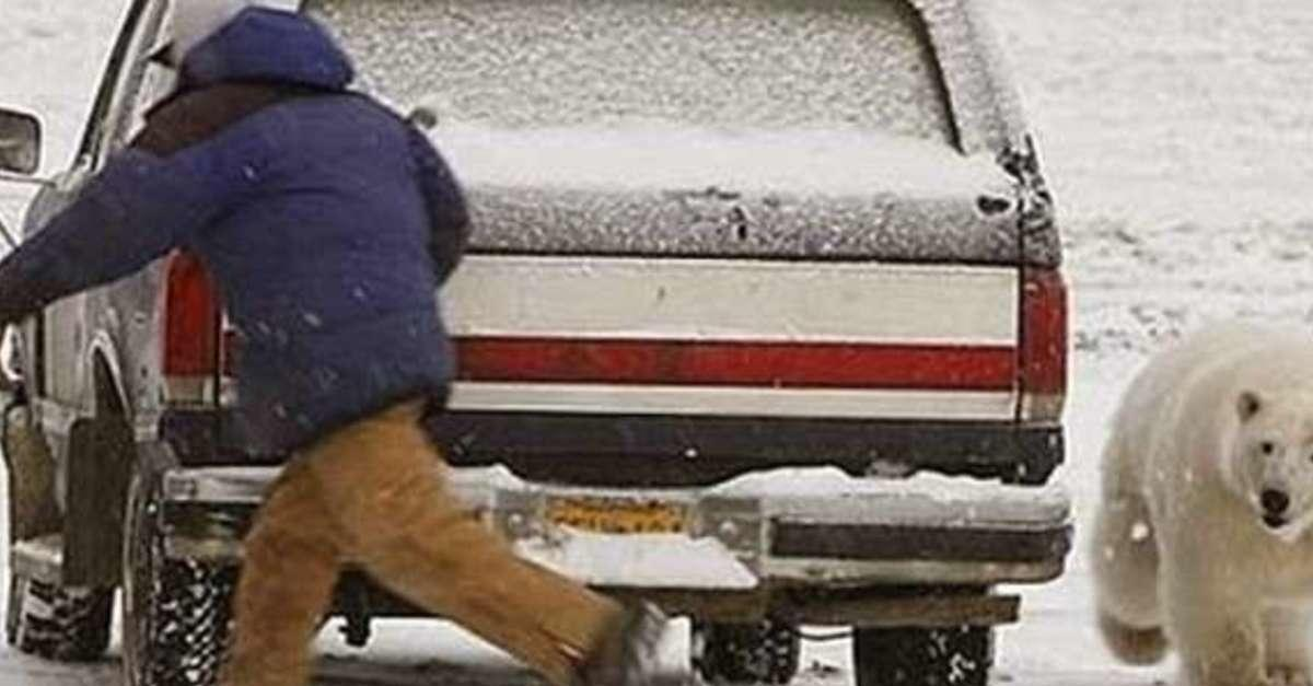 14 Morons Who Learned Not To Mess With Nature