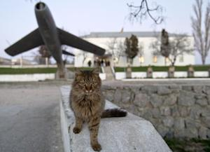 A cat is back dropped by an early model MIG Russian…
