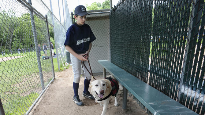 In this Sunday, May 29, 2011 file photo, Jeff Glazer guides his allergy-sniffing dog, Riley, through a dugout of a ball field before his team's baseball game in Middlebury, Conn. Riley accompanies Jeff to ensure there are no peanut products or residue that could trigger his life-threatening allergic reactions. (AP Photo/Jessica Hill)
