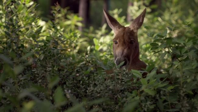 The 'Young Pope' Popedown, Episode 2: Release The Papal Kangaroo