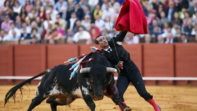 Spanish matador Jose Maria Manzanares is destabilized by a bull during a bullfight at The Maestranza bullring in Seville