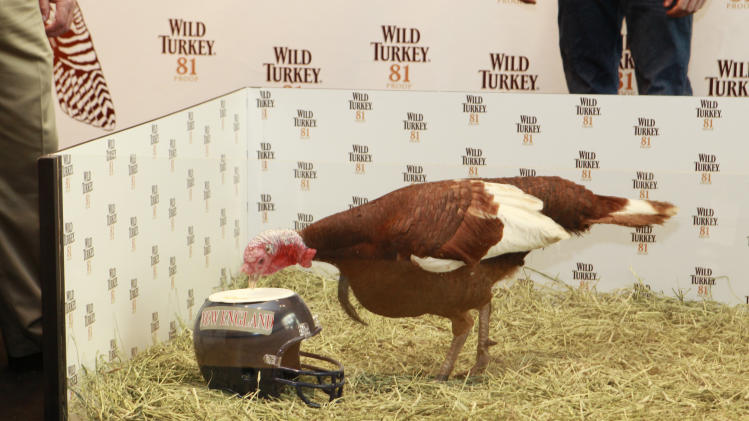 IMAGE DISTRIBUTED FOR WILD TURKEY - Football Picking Turkey, Jimmy Junior,  is seen at the Wild Turkey Triple Barrel Challenge, picking New England patriots as the projected winner on Tuesday, Nov. 20, 2012 in New York. (Photo by Mark Von Holden/Invision for Wild Turkey/AP Images)