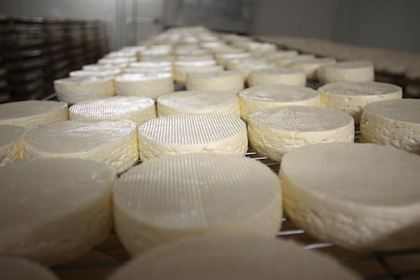 'Cheese diplomacy' fails as French experts snub North Korea