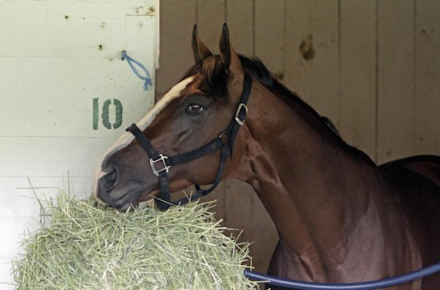 Kentucky Derby entrant Union Rags eats after a morning workout at Churchill Downs Tuesday, May 1, 2012, in Louisville, Ky. (AP Photo/Garry Jones)