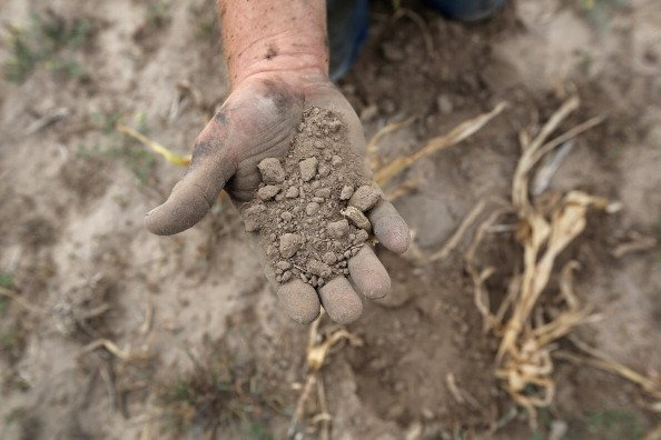 Darren Becker sifts through arid topsoil under a ruined crop on the family farm on August 24, 2012 in Logan, Kansas. Like many Kansas farmers who's profits have been wiped out by the record drought, t