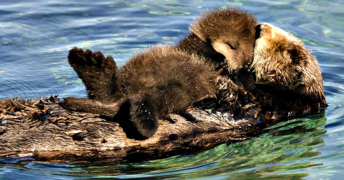 Otters That Are So Cute, You'll Be in Tears