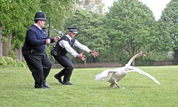 Simon Pegg and Nick Frost in Rogue Pictures' Hot Fuzz