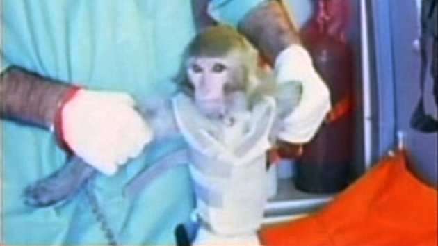 Iran Launches Monkey Into Space (ABC News)