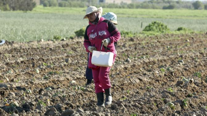 Women plant potatoes in Kelibia, north-east of Tunisia
