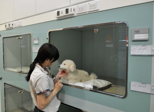 These days younger Koreans are spending more on their pets, enabling the rise of a high-end industry