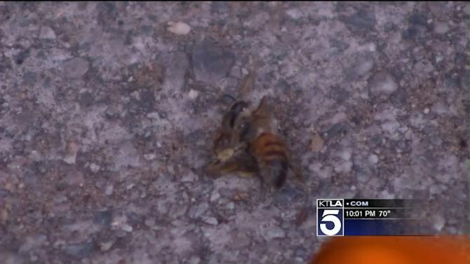 Woman Stung 105 Times in OC; `Unusually Aggressive` Bees Sting Riverside Crossing Guard