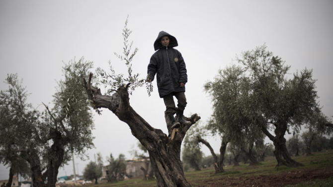 A displaced Syrian boy is seen at the top of an olive tree near the Azaz camp for displaced people, north of Aleppo province, Syria, Friday, Feb. 22, 2013. According to Syrian activists the number of people in the Azaz camp has grown by 3,000 in the last weeks due to heavier shelling by government forces. (AP Photo/Manu Brabo)