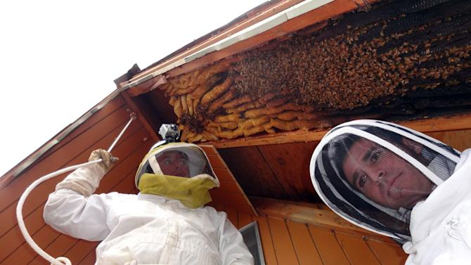 Utah cabin had uninvited guests _ 60,000 bees