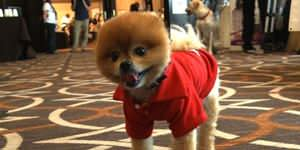BlogPaws: Social media...for pets!