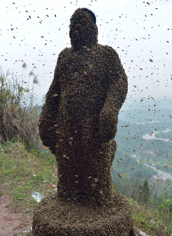 Beekeeper She Ping (AFP)