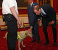 Britain's Prince Charles and his son Prince William greet a customs officer and her search dog during a conference on Illegal Wildlife Trade at Clarence House in central London