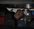 Palestinian passengers carry their suitcases into a bus at the Rafah border crossing in the southern Gaza Strip