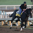 An exercise rider takes Prayer for Relief for a morning workout for the Breeders' Cup races at Santa Anita Park Tuesday, Oct. 28, 2014, in Arcadia, Calif. (AP Photo/Jae C. Hong)