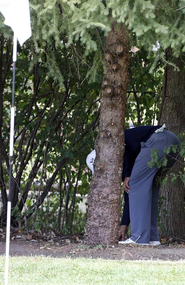 In this Sept. 13, 2013, file photo, Tiger Woods checks his ball behind a tree behind the first green during the second round of the BMW Championship golf tournament at Conway Farms Golf Club in Lake Forest, Ill. Golf Channel analyst Brandel Chamblee says he insinuated that Tiger Woods cheated and gave the world's No. 1 player an