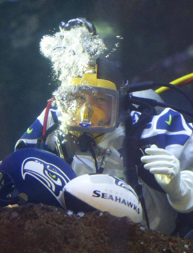 Nicole Killebrew, a diver at the Seattle Aquarium, wears a Seattle Seahawks NFL football #12 jersey as she dives in a large interactive marine life display Friday, Jan. 17, 2014, in Seattle. The Seahawks will play the San Francisco 49ers on Sunday for the NFC championship in Seattle, and the aquarium was one of many locations around the city promoting the game