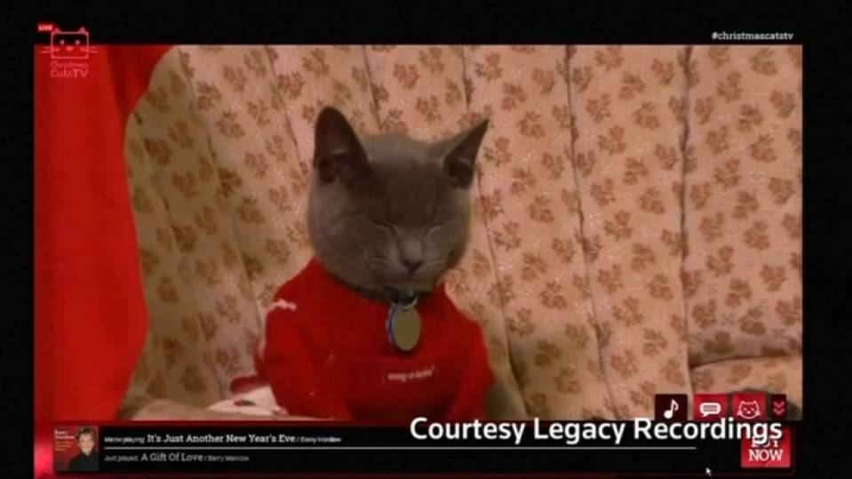 """Christmas Cats TV"" encourages pet adoptions"