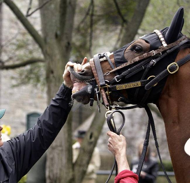 Horse identifier Brooks Beacraft, left, checks the lip tattoo of a horse in the paddock before a race on opening day at Keeneland in Lexington, Ky., Friday, April 4, 2014