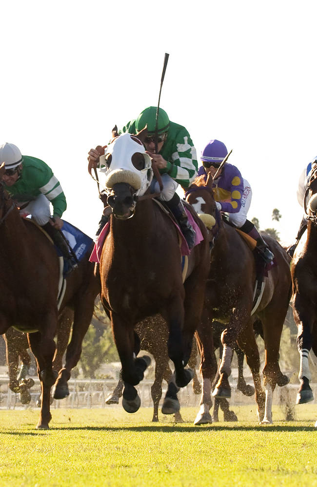 In this image provided by Benoit Photo, Chips All In and jockey Julien Leparoux, center, overpower the field to win the Grade III, $100,000 Eddie D. Stakes horse race on Friday, Sept. 27, 2013, at Santa Anita Park, Arcadia, Calif