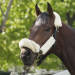 No Triple Crown: Oxbow upsets Orb at Preakness