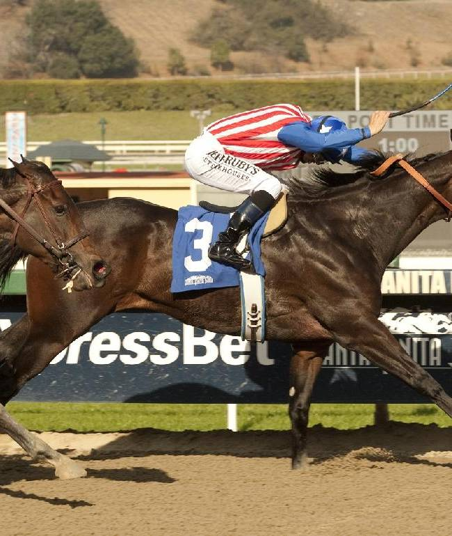 In this image provided by Benoit Photo, Awesome Baby (3), with Mike Smith aboard, wins the Grade II Santa Ynez Stakes horse race on Saturday, Jan. 4, 2014, at Santa Anita Park in Arcadia, Calif