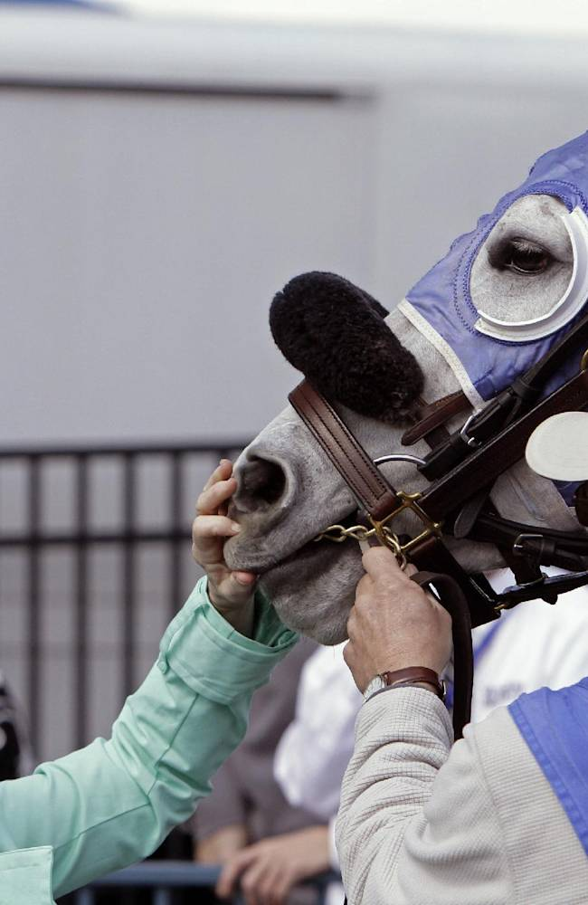 Horse identifier Melinda Vest, left, checks the lip tattoo of a thoroughbred running in a horse race at Turfway Park in Florence, Ky., Saturday, March 22, 2014. Each horse entered in a race is checked before entering the saddling paddock