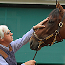 Trainer Bob Baffert rubs the head of Preakness Stakes winner American Pharoah outside the stakes barn, Sunday, May 17, 2015 at Pimlico Race Course in Baltimore. (AP Photo/Garry Jones)