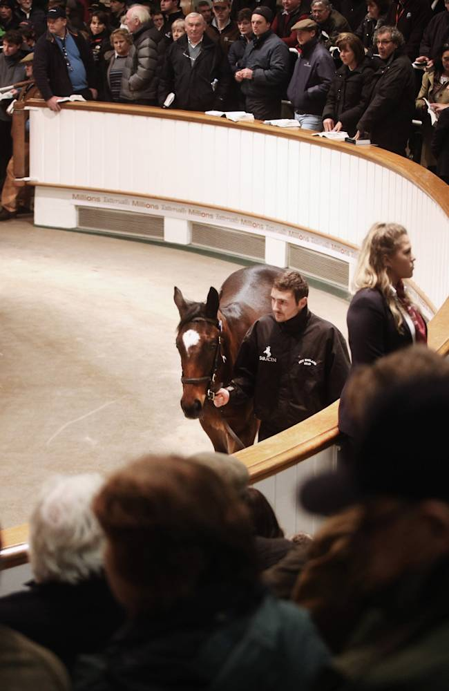 Four Foals From Legendary Racehorse Frankel Auctioned At Newmarket