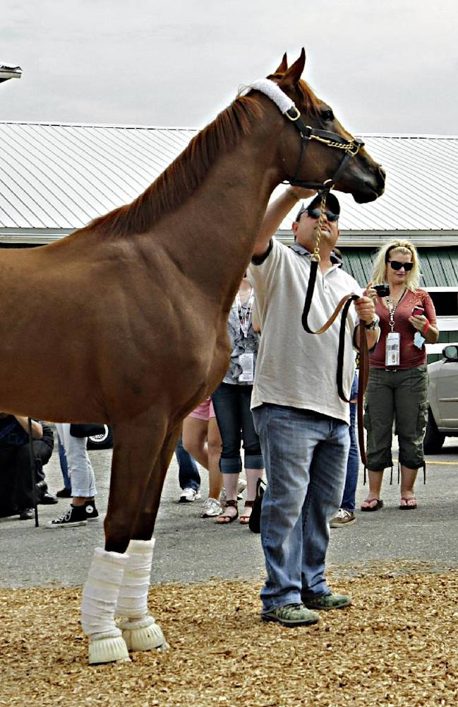 Stopping to pose for photographers before heading into the stakes barn at Pimlico Race Course in Baltimore, Md., Monday, May 12, 2014, Kentucky Derby winner California Chrome is held by assistant trainer Alan Sherman