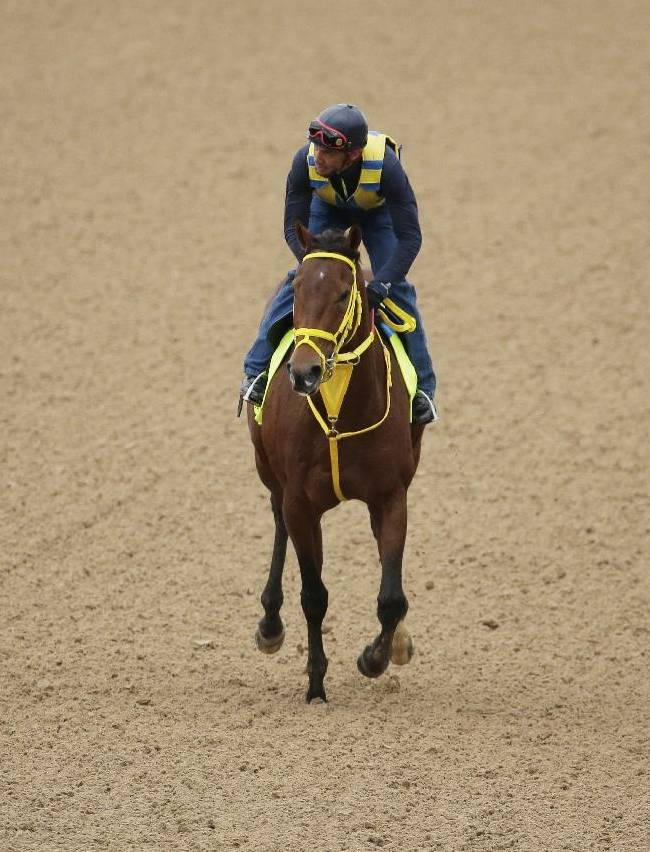 Exercise rider Juan Belmonte takes Kentucky Derby hopeful Wildcat Red for a morning workout at Churchill Downs Wednesday, April 30, 2014, in Louisville, Ky