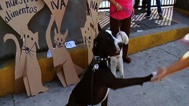 Dogs Protest Tax On Pet Food