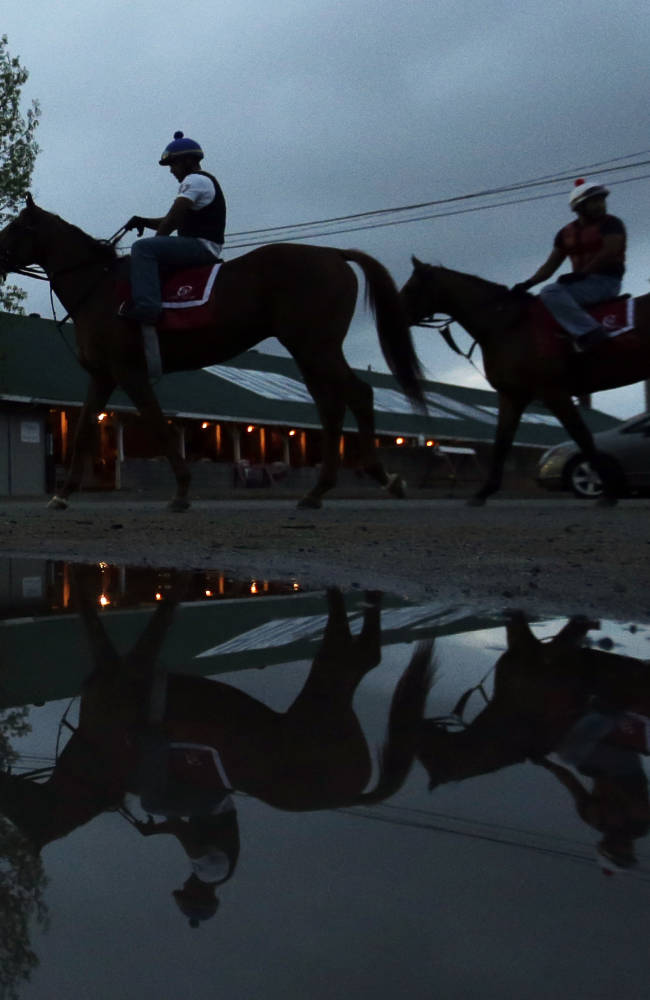 Horses make their way to the track for a morning workout at Churchill Downs Tuesday, April 29, 2014, in Louisville, Ky