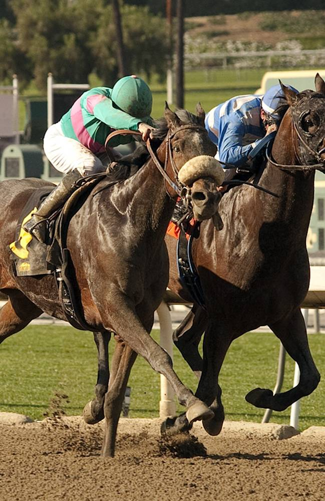 In this image provided by Benoit Photo, Blingo, left, with Aaron Gryder aboard, battles Imperative, with Kent Desormeaux aboard, in midstretch before going on to win the Grade II San Antonio Stakes horse race on Saturday, Feb. 8, 2014, at Santa Anita Park in Arcadia, Calif
