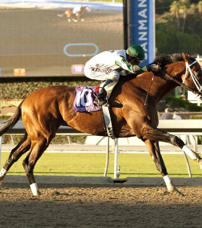 In this image provided by Benoit Photo, Mucho Macho Man, with Gary Stevens aboard, wins the Grade I, $250,000 Awesome Again Stakes horse race on Saturday, Sept. 28, 2013, at Santa Anita Park in Arcadia, Calif