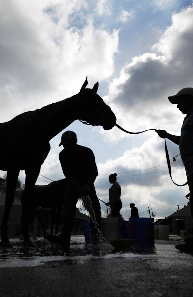 Horses get bathes after morning workouts at Churchill Downs Tuesday, April 29, 2014, in Louisville, Ky