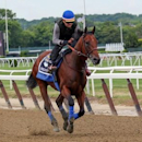 Jun 4, 2015; Elmont, NY, USA; American Pharaoh ridden by exercise rider Jorge Alvarez gallops the front stretch during a morning workout in preparation for the 2015 Belmont Stakes at Belmont Park. Mandatory Credit: Anthony Gruppuso-USA TODAY Sports