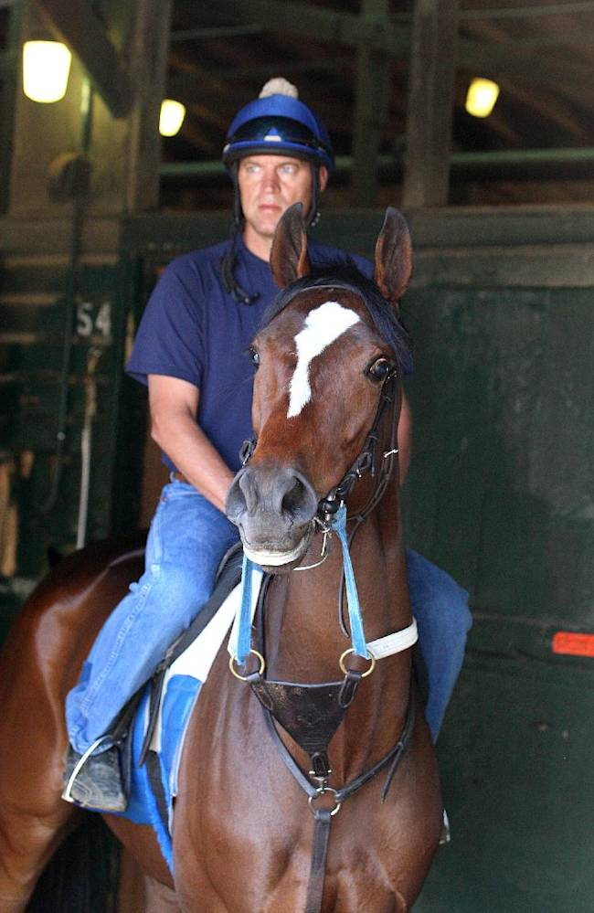 This handout provided by Equi-Photo shows Untapable, assistant trainer Darren Fleming up, walks in the shedrow  at Monmouth Park in Oceanport, N.J., Friday, July 25, 2014. Untapable is expected to compete in the Haskell Invitational horse race on Sunday