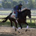 Exercise rider Peter Shelton rides Preakness Stakes entrant Itsmyluckyday as they gallop at Pimlico Race Course Friday, May 17, 2013 in Baltimore. The Preakness Stakes horse race is scheduled for Saturday. (AP Photo/Garry Jones)