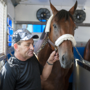 This handout provided by the Maryland Jockey Club shows Kentucky Derby and Preakness Stakes winner American Pharoah being held by assistant trainer Jimmy Barnes in a van for transport as they prepare to leave Pimlico Race Course in Baltimore on Monday, May 18, 2015. American Pharoah will attempt to become the 12th Triple Crown winner and the first since Affirmed in 1978, at the Belmont Stakes on June 6. (Jerry Dzierwinski/Maryland Jockey Club via AP)